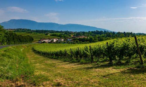 Le colline del Prosecco sono Patrimonio Unesco! Scopriamole insieme